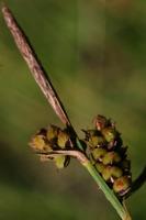 Photographie n°bb021568 du taxon