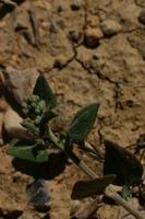 Photographie n°bb021945 du taxon