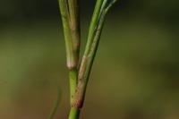 Photographie n°bb022836 du taxon