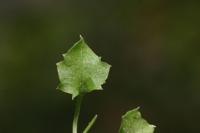 Photographie n°bb022839 du taxon