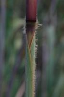Photographie n°bb022973 du taxon