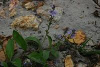 Photographie n°bb023276 du taxon