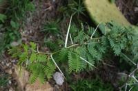 Photographie n°bb023601 du taxon