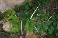 Photographie n°bb023602 du taxon