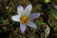 Photographie n°bb023677 du taxon