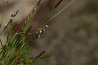 Photographie n°bb024103 du taxon