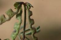 Photographie n°bb024321 du taxon