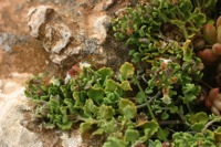 Photographie n°bb024566 du taxon