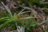 Photographie n°bb026427 du taxon