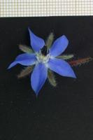 Photographie n°bb026759 du taxon