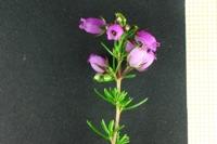 Photographie n°bb026784 du taxon