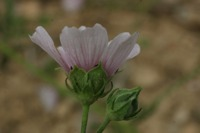 Photographie n°bb027640 du taxon