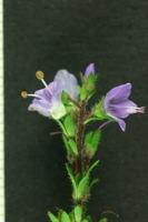 Photographie n°bb028148 du taxon