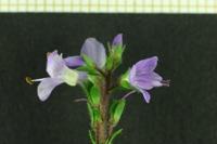 Photographie n°bb028149 du taxon