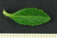 Photographie n°bb028151 du taxon