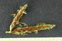 Photographie n°bb028389 du taxon