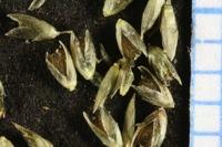 Photographie n°bb028830 du taxon