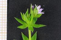Photographie n°bb029041 du taxon