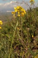 Photographie n°bb029315 du taxon
