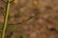 Photographie n°bb029336 du taxon
