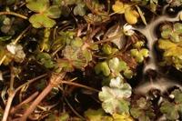 Photographie n°bb029356 du taxon