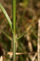 Photographie n°bb029662 du taxon