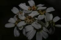 Photographie n°bb031800 du taxon