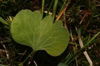 Photographie n°bb032316 du taxon
