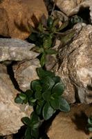 Photographie n°bb032465 du taxon