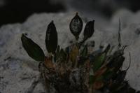 Photographie n°bb032715 du taxon
