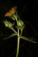 Photographie n°bb033095 du taxon