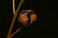 Photographie n°bb033486 du taxon