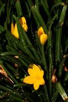 Photographie n°bb033608 du taxon