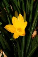Photographie n°bb033609 du taxon