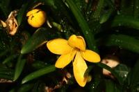 Photographie n°bb033610 du taxon