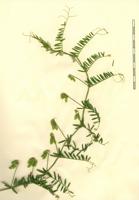 Photographie n°bb033804 du taxon