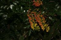 Photographie n°bb035405 du taxon