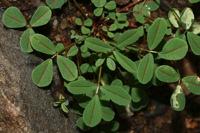 Photographie n°bb035636 du taxon