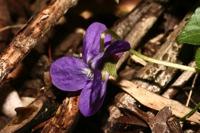 Photographie n°bb035933 du taxon