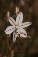 Photographie n°bb036232 du taxon