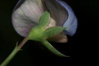 Photographie n°bb037611 du taxon
