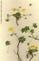 Photographie n°bb038064 du taxon