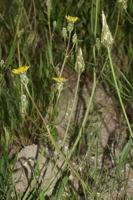 Photographie n°bb038523 du taxon
