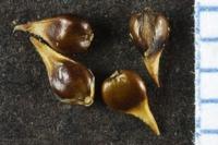 Photographie n°bb038865 du taxon