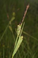 Photographie n°bb039160 du taxon