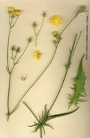 Photographie n°bb040237 du taxon