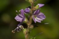 Photographie n°bb040293 du taxon