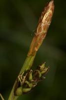 Photographie n°bb040346 du taxon