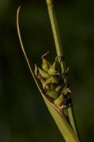 Photographie n°bb040349 du taxon