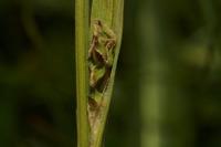 Photographie n°bb040351 du taxon